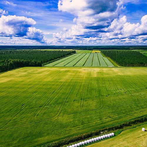 Biochar for manufacturing specialized fertilizers